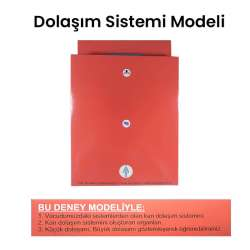 Kar - Dolaşım Sistemi Modeli