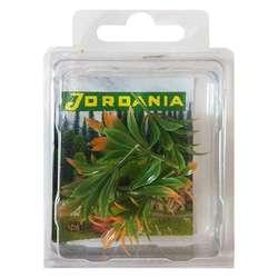 Jordania - Jordania Çiçek Maketi 4cm 5li FLA1