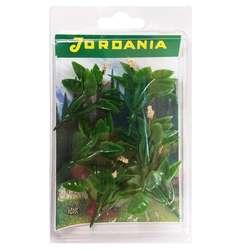 Jordania - Jordania Çiçek Maketi Pudra 4.5cm 6lı FL3245P