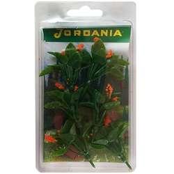 Jordania - Jordania Çiçek Maketi Turuncu 4.5cm 6lı FL3245T